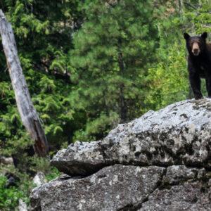 SW Bear 2 solilliqouy